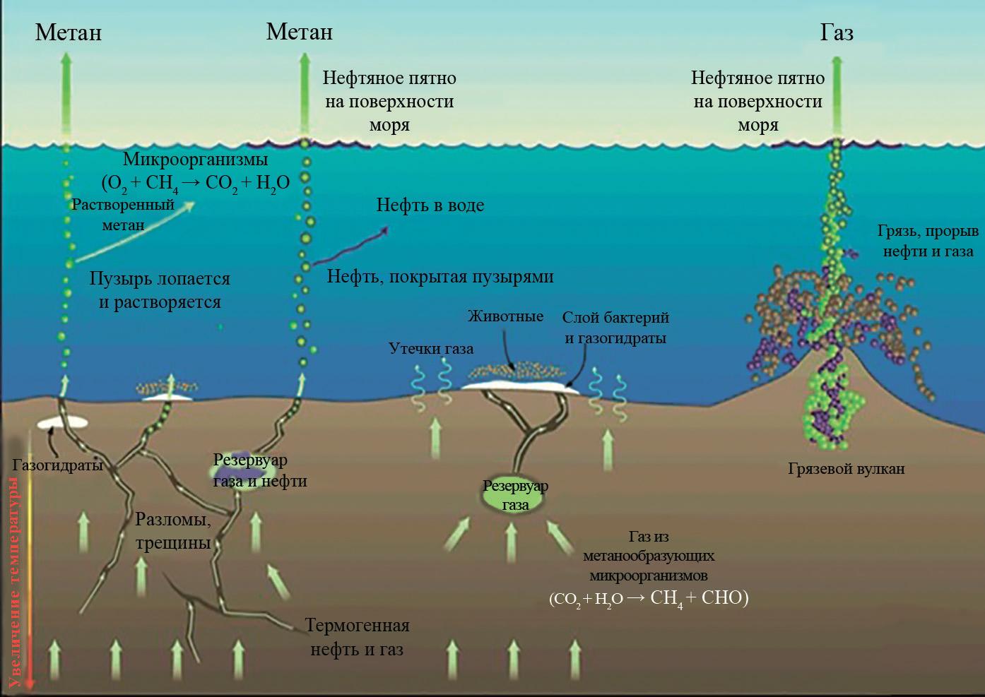 Движение газа в донных отложениях и водной толще